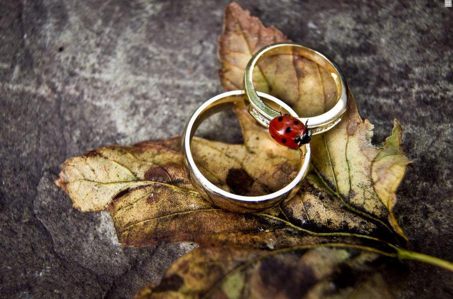 Gold Coast Wedding Photography Just Rebecca Photography 24